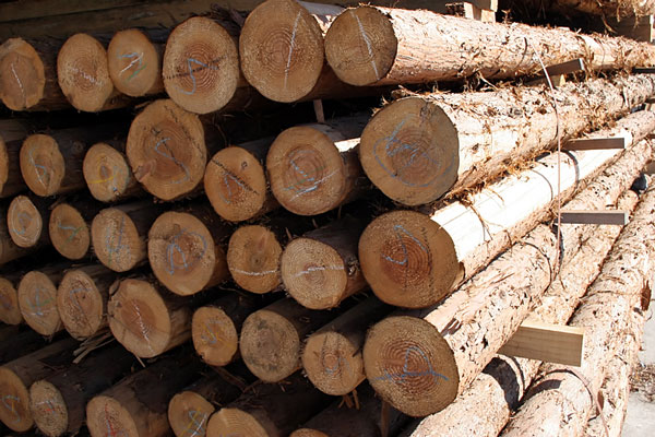 Forest Products image