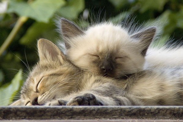 two sleeping kittens