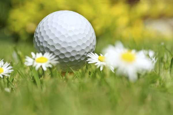 Recreation picture - golf ball, daisies, and a grassy meadow