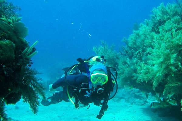 scuba diver diving in the Florida Keys