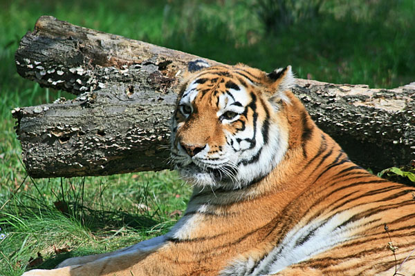 Zoos image